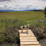 grist-dog-bridge